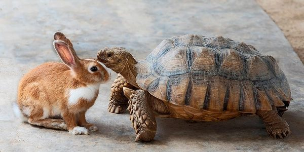 ペットシッターは小動物も対応している?小動物を預けるポイント