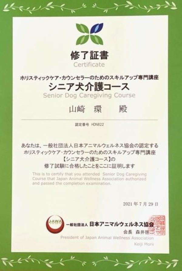 ホリスティックケア・カウンセラー シニア犬介護コース